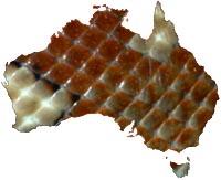 Centralian Pythons Morelia bredli
