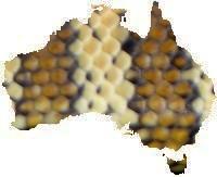 Darwin                   Carpet Pythons Morelia spilotes variegata