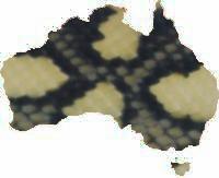 Available Jaguar Carpet Pythons