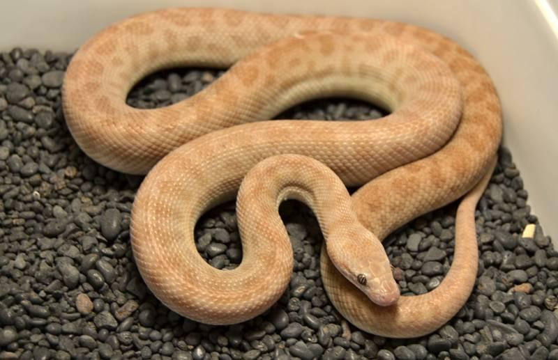 Children's                       python