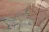 Varanus acanthurus, ackie