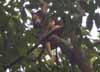 Komodo skull